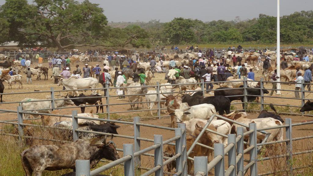 Le marché à bétail en pleine animation