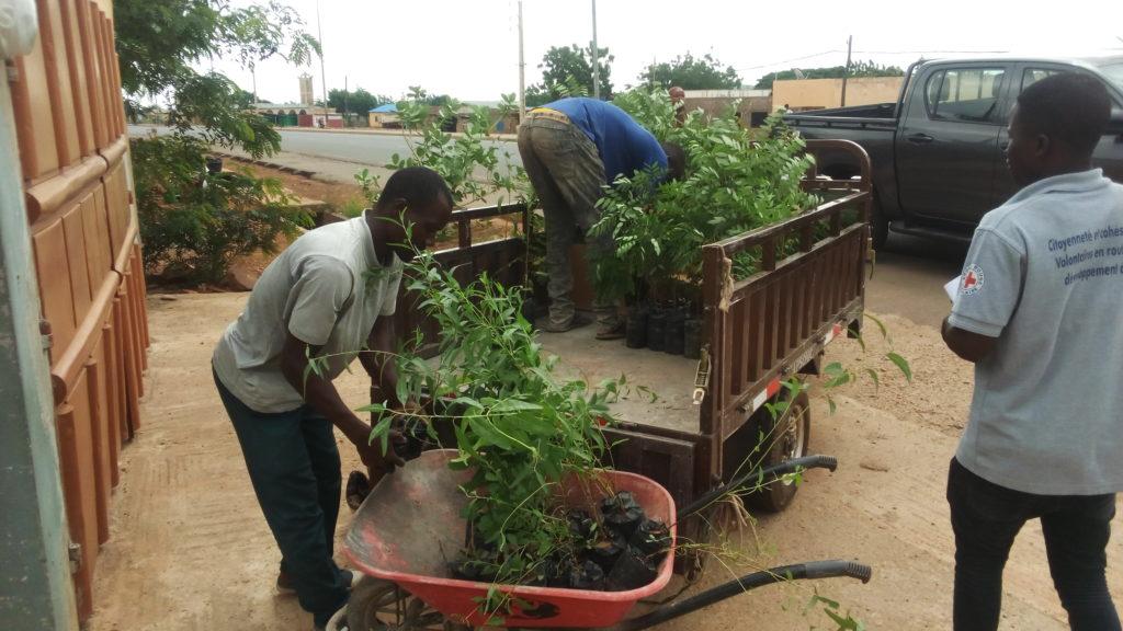 Chargement des plants pour le reboisement