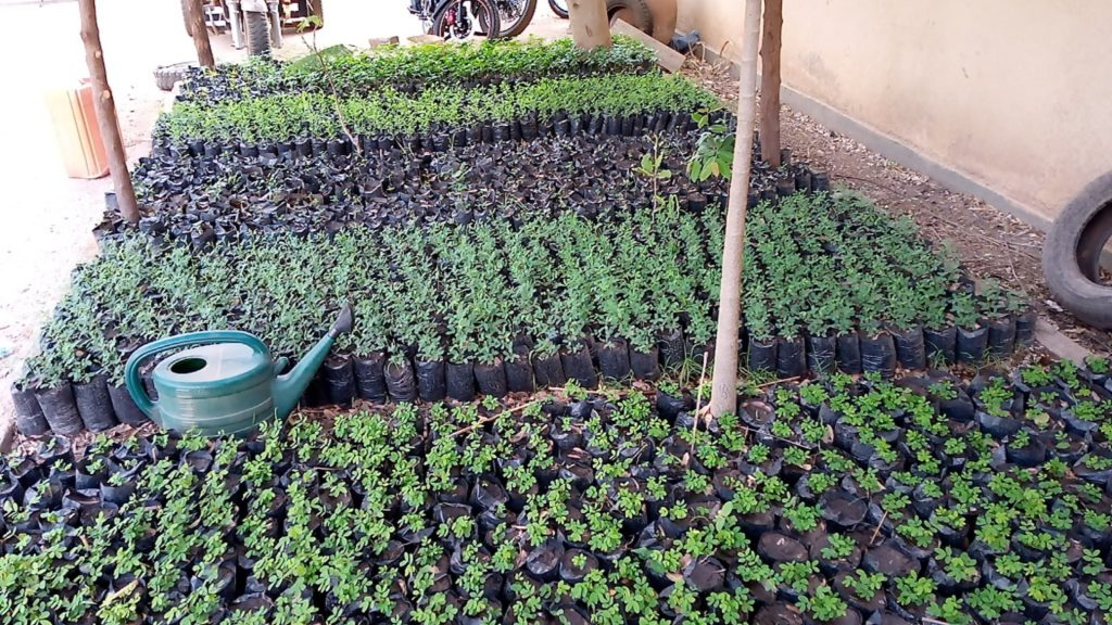 les jeunes plants en pleine croissance