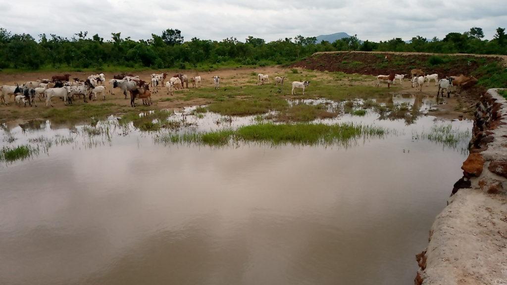 Point d'eau pastoral